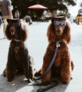 Two dogs with sunglasses
